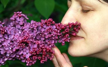 Woman sniffing purple flowers
